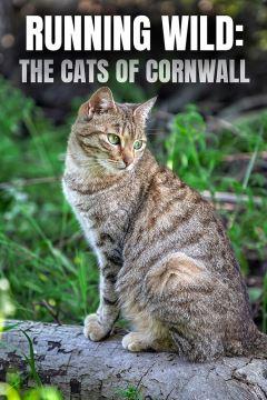 Running Wild: The Cats of Cornwall